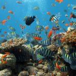 グアムの水族館アンダーウォーターワールドの魅力を紹介します!